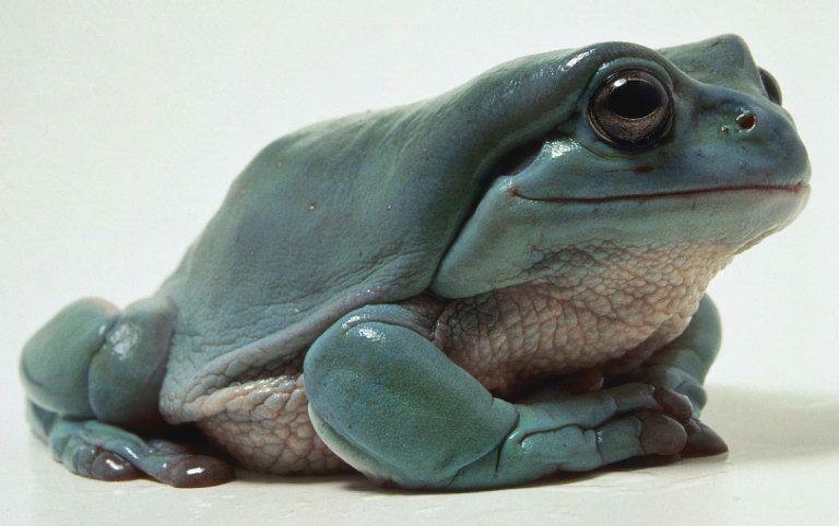 the perfect frog-fixed